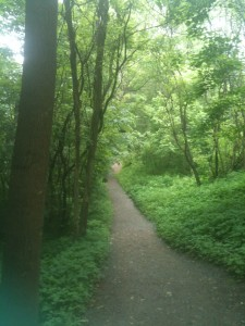 A section of the walking trail at Quechee Gorge.
