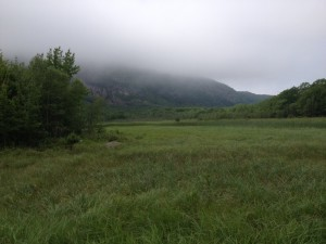 A meadow in the Acadia fog.