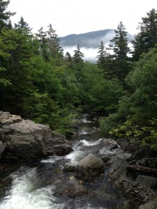 A view from our hike in the White Mountains.