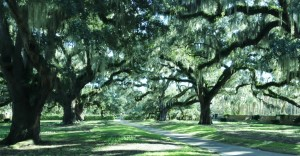 The lush grounds of Brookgreen Gardens