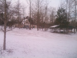 The grounds of the Magnolia RV Park & Campground after our first snow in the Monaco.