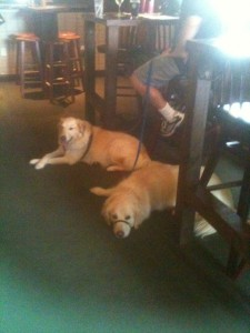 It was nice of this pub in Bar Harbor to let the dogs join us inside the building.