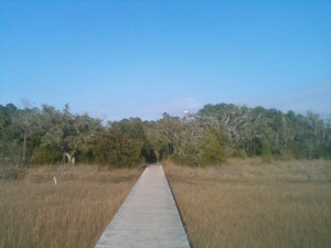 Looking back across the boardwalk over the marsh to the walking trails at James Island County park.