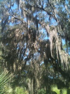I was mesmerized by the Spanish Moss in the Low Country. It was eerie and soothing all at the same time. The landscape almost shimmered around us as the gentle breezes helped the lacy strands sway from the tree limbs. It also seemed to change colors based on the time of day or what the sky was doing.