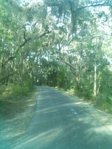 A section of the many miles of walking/biking paths at James Island County Park.