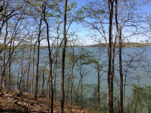 Fort Loudoun Lake (part of the Tennessee River), was just through the woods at Lazy Acres RV Park. We could see the water through the trees when we arrived, but the leaves were budding so fast, the view was almost completely blocked by fresh green foliage by the time we left two weeks later.