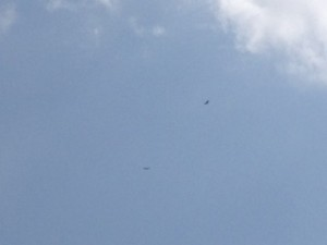 Bald eagles flying over the river at our camp.
