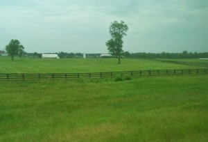 We loved the view from most of the drives in the Bluegrass. Whether it was interstate or back roads, the asphalt was constantly lined with picturesque horse farms on both sides.