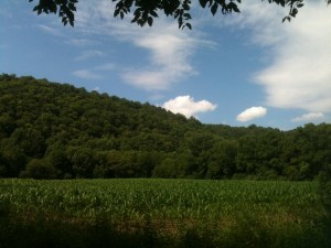 One of the corn fields along the McDade Recreational Trail.
