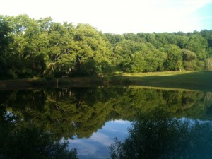 The little pond at Foxwood Family Campground provided some pretty scenery on our morning dog walks.