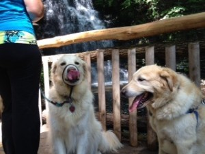 The dogs were mucho tired after our morning at Bushkill Falls.