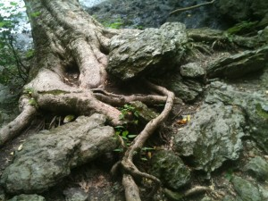 More gnarly roots and rocks.