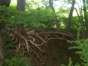 I love all the exposed tree roots along the river bank.