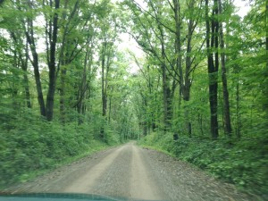 A one lane dirt road connected our campground to Oil Creek State Park, The short drive between the two places was always spellbinding.