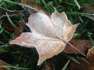 After the leaves finished turning, the mornings became a little frosty.