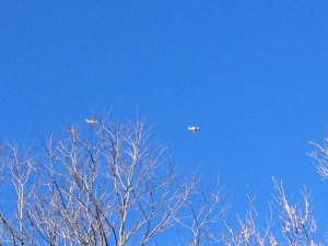 We watched this plane and this glider 'play' around during that same Sunday walk.