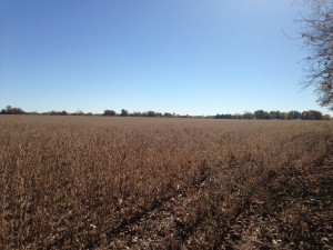 Our campground was surrounded by soy bean fields on three sides.