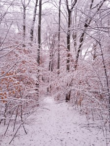 The snow-kissed nature trail at our campground.