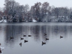 Our neighborhood geese enjoying an icy Thanksgiving morning.