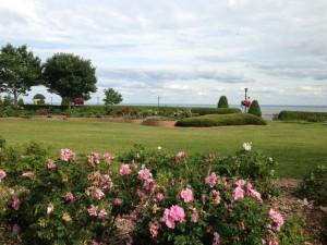 The Rose Garden in Duluth.