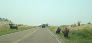 Buffalo traffic jam.