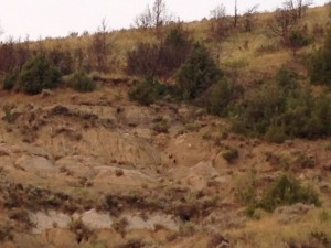 It is almost impossible to see, but I took this photo of a coyote making his way up the side of this mountain.