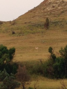 A single pronghorn at the base of a hill.