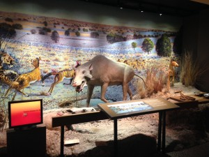 "The Badlands Visitor Center near Interior, SD has a wonderful exhibit that focuses on the cultural history, prairie ecology, and paleontology of the White River Badlands. They also have a book store, a theater featuring the film ""Land of Stone and Light"", and a gift shop."