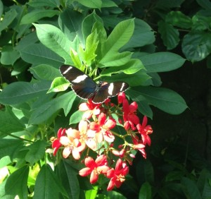 The butterfly garden at the zoo was very lush.