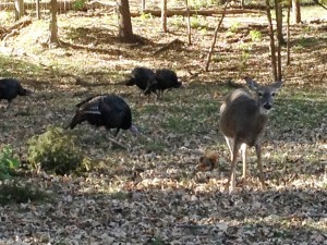 All God's creatures: deer, turkey and squirrels.