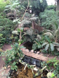 Inside the Omaha Zoo's rainforest exhibit.