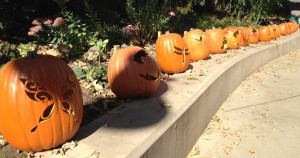 Pumpkins carved with all sorts of animal designs lined the sidewalks at the Zoo.