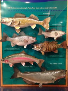 The types of fish that can be caught in Lake McConaughy.