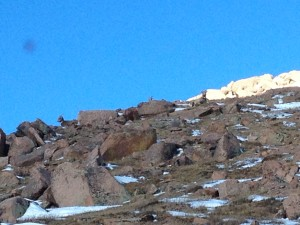 Can you spot the three big horn sheep keeping an eye on the COG during our descent?
