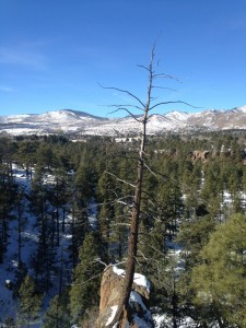 A view from Los Alamos.