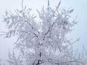 Frozen fog.