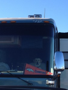 We spent one last night in Tucson after we picked up the rig from the shop. This dog was still celebrating the victory. I wonder how his paws reach the gas pedal?