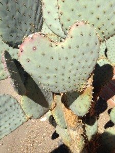 Finding a heart shaped cactus is so fun. They are full of love, and slightly prickly... sort of like me!