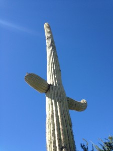 "The Saguaro says ""Welcome to our National Park""!"