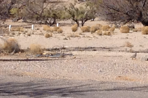 You have to look very closely, but there is a dove and a quail in this picture. Mike was about to hyperventilate.