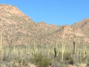 The Saguaro National Park from the Visitor's Center. We were happy our National Park Pass got us in for free.