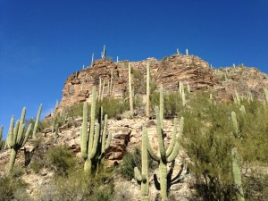 Sabino Canyon on a crisp clear day.