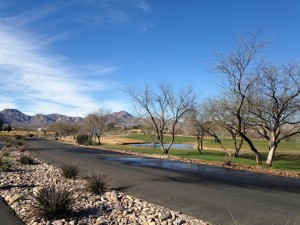 A typical view from our daily walks within the Tubac Golf Resort.