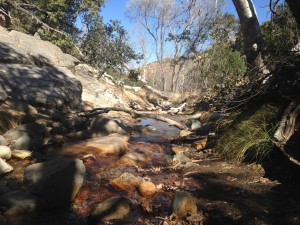 The creek in Madera Canyon.