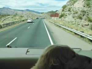 I didn't realize our drive north along I-17 after Phoenix was going to be through the mountains. Cessna thought the terrain was very pretty as green emerged throughout the landscape. She was hoping she would be able to pee on grass again.