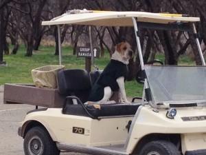 Park Ranger Dog.
