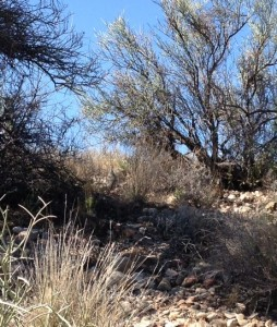 If you look closely, you will see a quail in the middle of the photo.