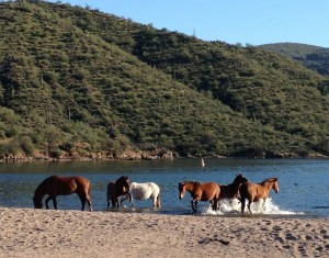 When the wild horses made their way to the beach by the lake, I was beside myself. What a lovely sight!