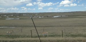 Antelope everywhere.
