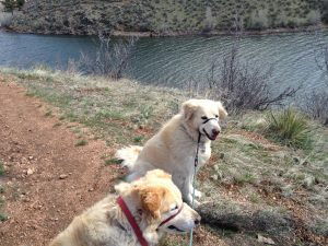 Piper, Cessna and I walked the trails at the park while Mike fished.